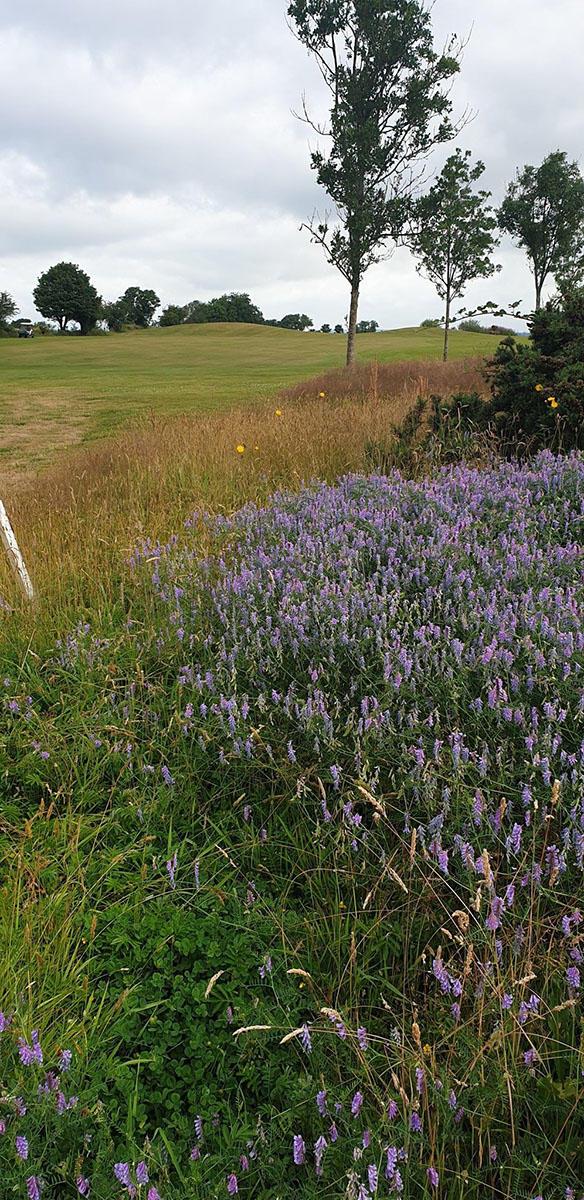 Blarney Golf Resort's flowers