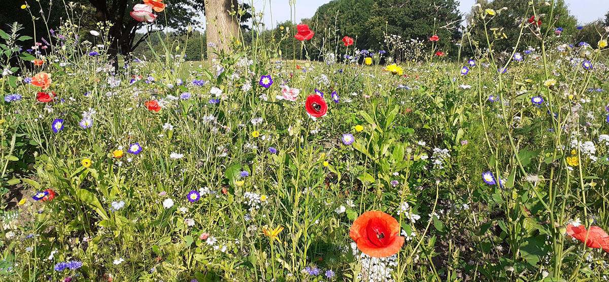 Joe Hendy's Wildflowers