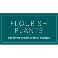 Flourish Plants