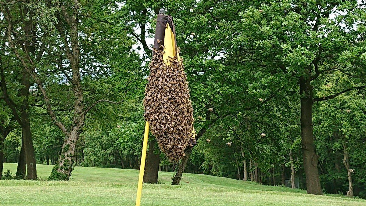 Bees at Lees Hall