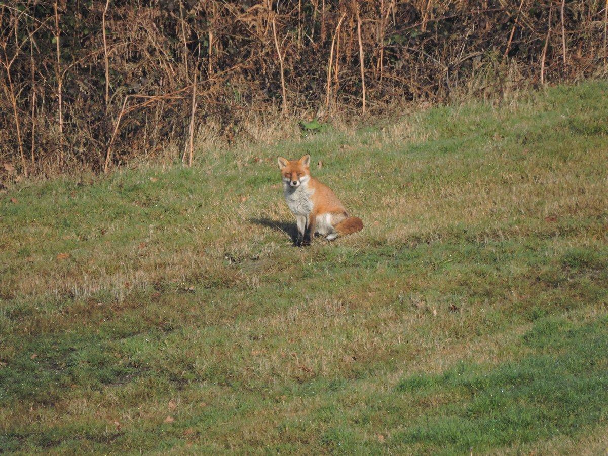 Fox at Purdis Heath Golf Club
