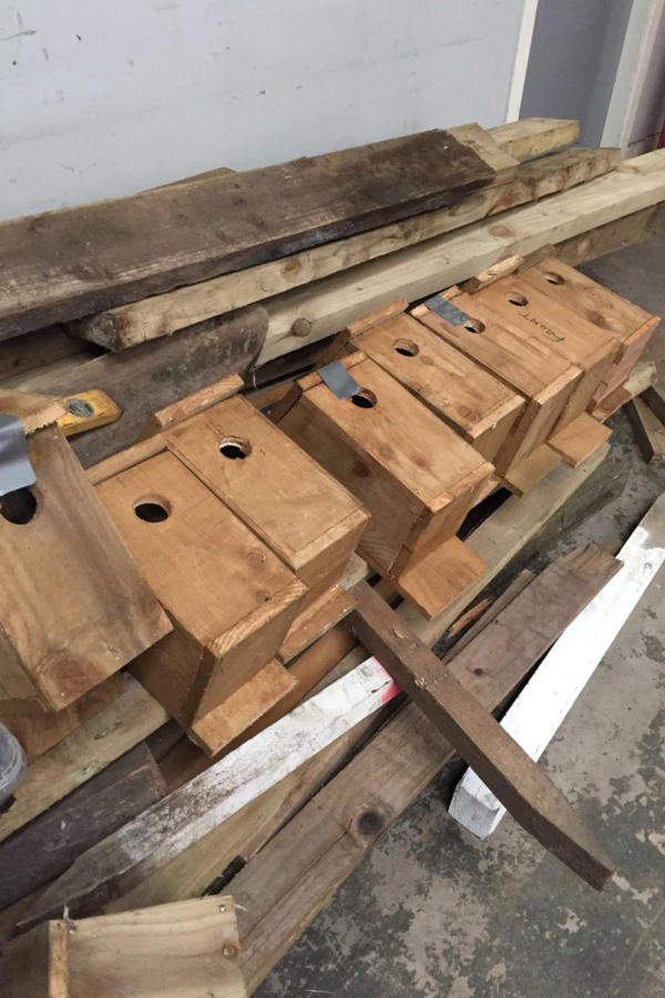 Scott Corrigan's Starling Boxes.