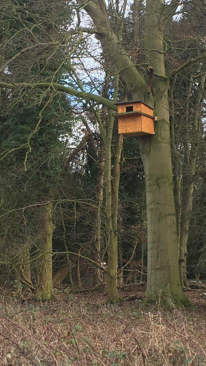 Cave Castle Golf Club's owl box