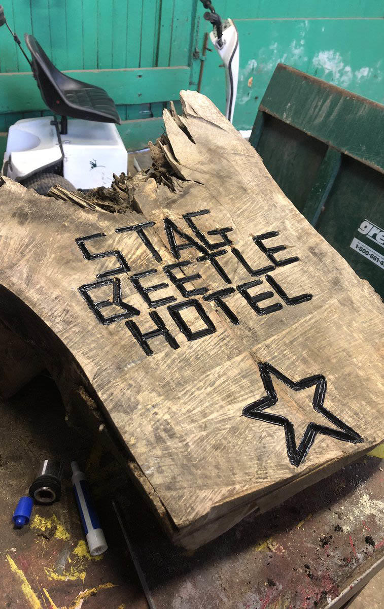 Stag beetle hotel