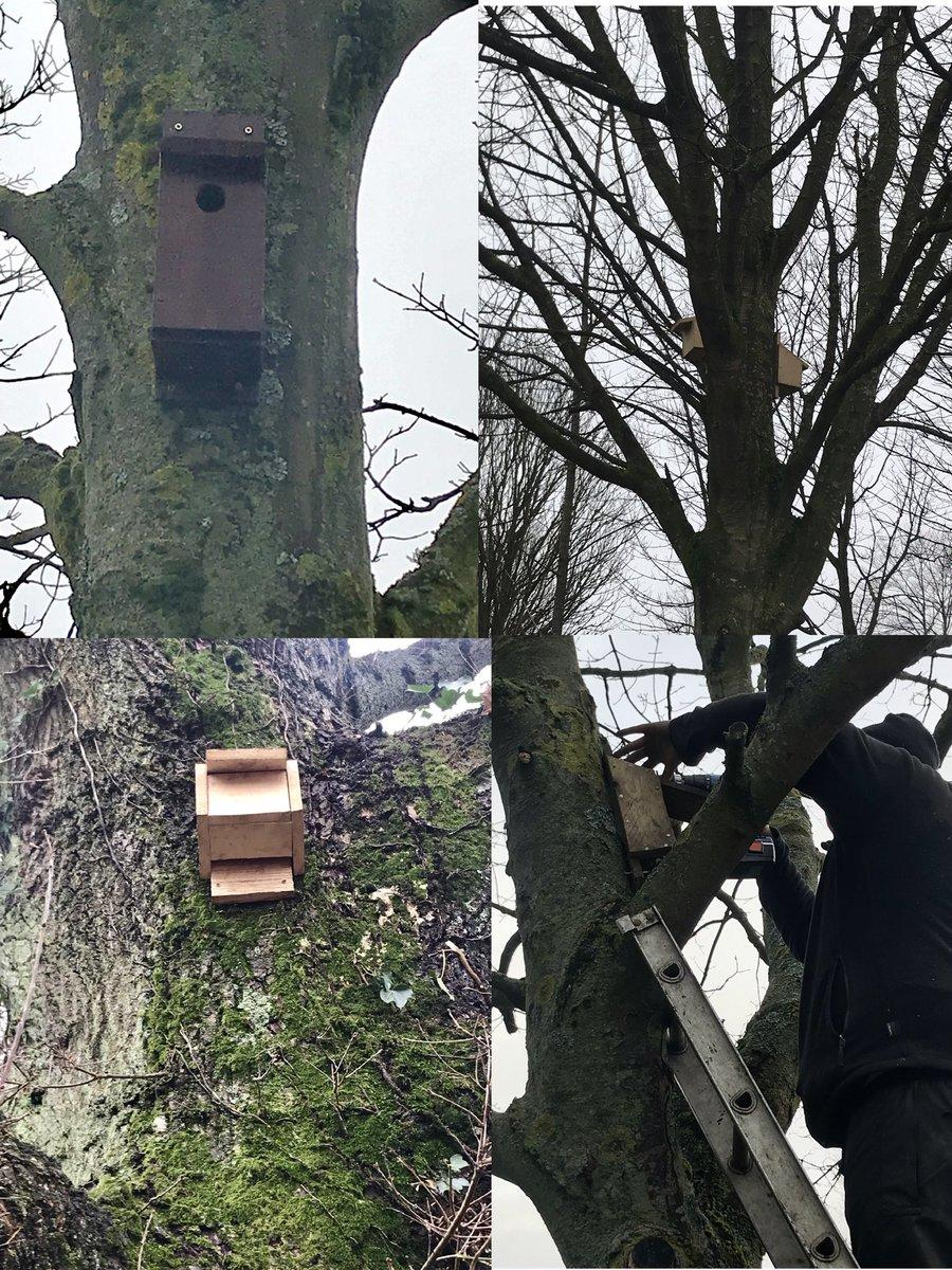 Stirling's bat boxes